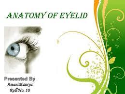 Eyelid Anatomy Anatomy Of Eyelid