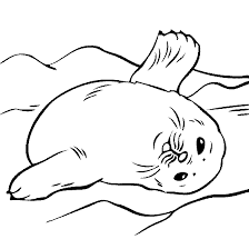 Small Picture Baby Seal Coloring Page Projects to Try Pinterest Baby seal