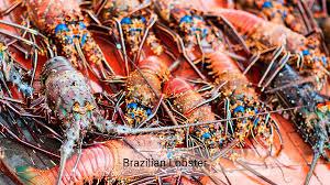Brazilian Lobster Centro Desarrollo Y Pesca Sustentable
