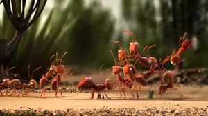 Муравейник в лесу. Нашли муравейник, записали видео - YouTube