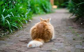 whats the best way to keep cats off how to stop cats coming into my garden