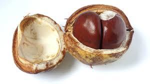 Bildresultat för höst nötter