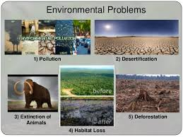 environment essay 3