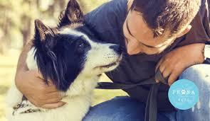 side effects of cbd oil in dogs