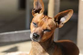 how to treat skin cancer in dogs