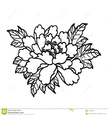 красивый цветок пиона конец вверх идея для татуировки новый