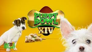 puppy bowl x halftime show. Unique Puppy Puppy Bowl Get Season 14 On YouTube In X Halftime Show E