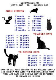 Kitten Teeth Chart Kitten Age Teeth Google Search Cats Cat Ages Siamese Cats