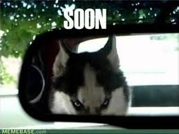 Husky Dog Memes Top 50 Funny Dogs Video - YouTube via Relatably.com