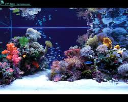 Funny Fish Tank Decorations 17 Best Images About Aquariums On Pinterest Bonsai Trees