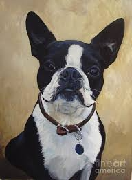 acrylic painting painting joey the boston terrier by suzanne schaefer