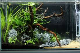 aquascape ada cube garden 60p a little piece of mekong day 1 aquarium decoration portal for all fish keepers