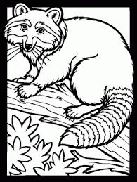 Small Picture Animals Page 20 Skunks 4 Animals Coloring Pages Color Skunk