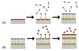 Molecular Layer Deposition Of Organic And Hybrid Organic Inorganic