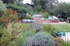 an elished landscape mixing california natives with plants from other mediterranean climates author s photographs
