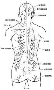 「背部 神経」の画像検索結果