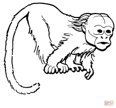 Coloring Pages Of A Monkey Curious Uakari Page Free Printable 1168