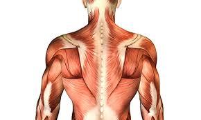 「筋肉が張る原因」の画像検索結果