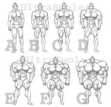 Body Size Chart Body Sketches Drawing Poses Mens Body Types