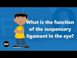 suspensory ligament of lockwood. what is the function of suspensory ligament in eye? lockwood