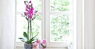 Fensterdeko Tolle Rabatte Bis Zu 70 Westwing