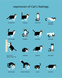 Cat Body Language Chart Image Result For Cat Body Language Chart Cats Cat Body