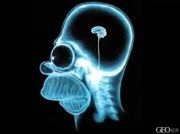 Рентгенологический портрет насарога