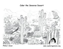 Small Picture Desert Coloring Pages Elioleracom