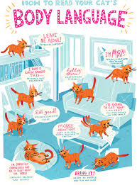 Cat Body Language Chart How To Speak Your Cats Language Healthy Paws