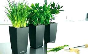 tall indoor plants large plant pots size of for uk pl