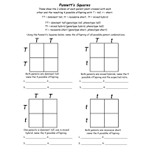 Monohybrid Punnett Square Practice Worksheet Answers Unique Student ...