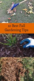 Green Thumbs In Cold Temps The Art Of Fall And Winter Gardening Fall Gardening