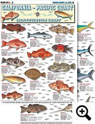 California Rockfish Chart Saltwater Fishing Charts And Saltwater Fish Identification
