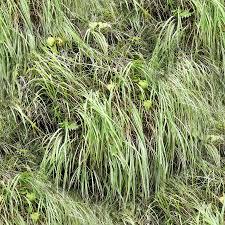 wild grass texture. JPG Wild Grass Texture