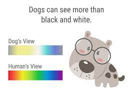 what colors do dogs like and see best