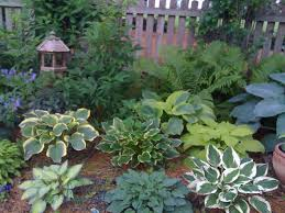 Small Picture Garden Design Ideas pic above is an atribute hosta garden edging