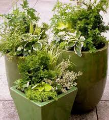 The 25 Best Winter Container Gardening Ideas On Pinterest Container Garden Ideas For Winter