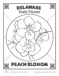 514425add88cac455ac43007728cc541 delaware state flower worksheet, flowers' and delaware on states worksheets