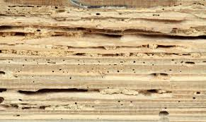 Image result for keep the termites from doing more damage
