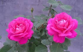 Download Best Flower Pics