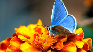 Image result for orange and blue flowers