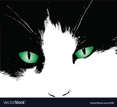 Eye Cat Design Cats Eyes Design