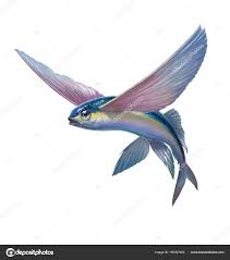 Image result for flying fish