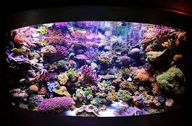 Daily And Weekly Coral Reef Tank Maintenance Schedule