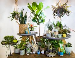 our tropical greenhouse is overflowing with beautiful foliage and a great selection of the best low maintenance and exotic houseplants