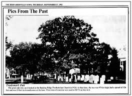 1924 View of the Basking Ridge White Oak after 3 tons of concrete were added