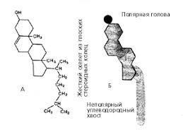 Биология Холестериновая угроза Миф или реальность Реферат  Молекула холестерина холестерола в виде химической формулы А и схематического изображения