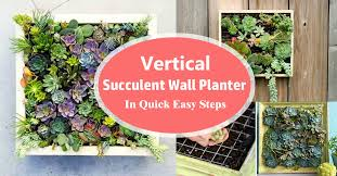 vertical succulent wall planter in quick easy steps diy succulent frame