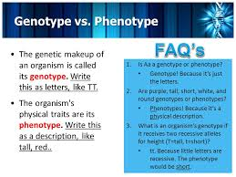 7 faq s genotype vs phenotype the genetic makeup of an organism is called its