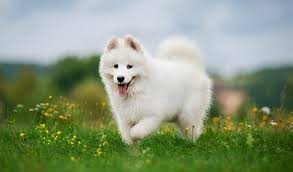 most beautiful dog breeds in the world. Fine The Most Beautiful Dog Breeds With In The World L